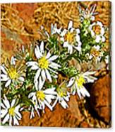 Leafy-bract Asters In Wildcat Canyon Trail Along Kolob Terrace Road In Zion National Park-utah Canvas Print