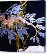 Leafy Sea Dragon - Seahorse Canvas Print