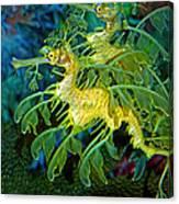 Leafy Sea Dragons Canvas Print