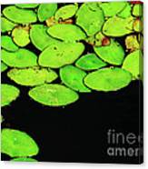 Leafy Swamp Canvas Print