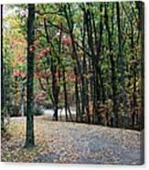 Leafy Trail Canvas Print