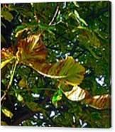 Leafy Tree Image Canvas Print