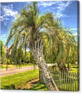 Leaning Palm Canvas Print