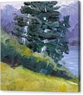 Leaning Pines Canvas Print
