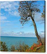 Leaning Tree Over Lake Canvas Print