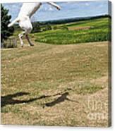 Leap Higher Canvas Print