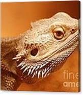 Leapin' Lizard Canvas Print