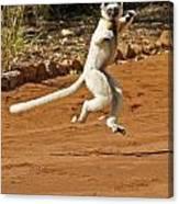 Leaping Lemur Canvas Print
