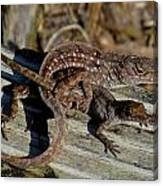 Leaping Lizards Canvas Print