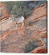 Learning How To Rock Climb Zion Canvas Print