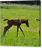 Learning To Run Canvas Print