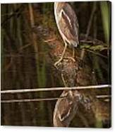 Least Bittern Pictures 17 Canvas Print