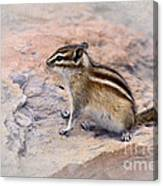 Least Chipmunk #2 Canvas Print