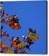 Leaves 3 Canvas Print