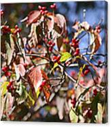 Leaves And Berries Canvas Print