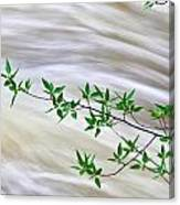 Leaves And Rushing Water Canvas Print