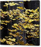 Leaves And Trees Canvas Print