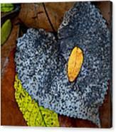 Leaves At Oak Openings Canvas Print
