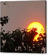 Leaves Cradling Setting Sun Canvas Print