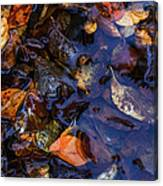 Leaves In A Puddle Canvas Print