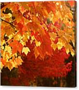 Fall Leaves In Afternoon Sun Canvas Print