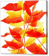 Leaves In Fall Canvas Print