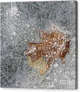 Leaves In Ice Canvas Print