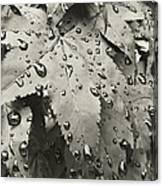 Leaves In Rain Canvas Print