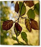 Leaves In The Breeze Canvas Print