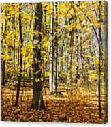 Leaves In The Woods Canvas Print