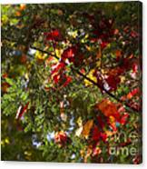 Leaves On Evergreen Canvas Print