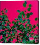 Leaves On Pink Back Lit Sky Abstract Canvas Print