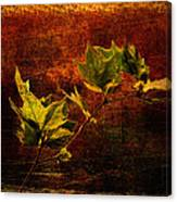 Leaves On Texture Canvas Print