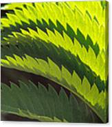 Leaves Patterns Canvas Print
