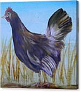 Legbar Chicken Canvas Print