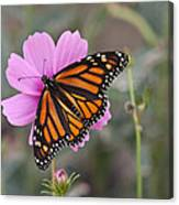 Legend Of The Butterfly - Monarch Butterfly - Casper Wyoming Canvas Print