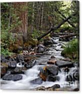 Lehman Creek In Great Basin National Park Canvas Print