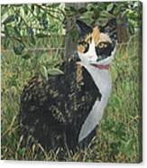 Leia Cat In Blueberries Canvas Print
