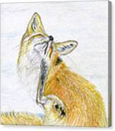 Leisure Fox Canvas Print