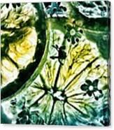 Lemon And Elderflower  Canvas Print
