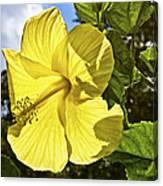 Lemon Yellow Hibiscus Canvas Print