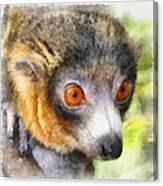 Lemur 004 Canvas Print