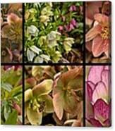 Lenten Rose Collage Canvas Print