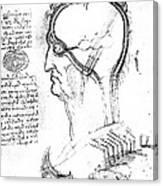 Leonardo: Brain, C1490 Canvas Print