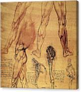 Leonardo: Legs, C1508 Canvas Print