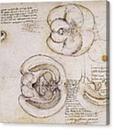 Leonardo: Ventricles, C1508 Canvas Print