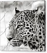 Leopard Black And White Photography Canvas Print