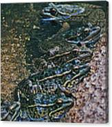 Leopard Frog Canvas Print