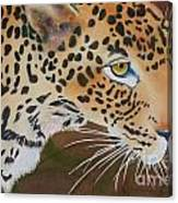 Leopard In Botswana Canvas Print