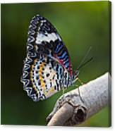 Leopard Lacewing Butterfly Canvas Print